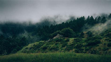 wallpaper 4k forest wallpaper forest 5k 4k wallpaper 8k mist hills fog