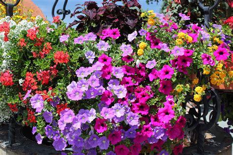 terrazzi in fiore concorso quot ceresole in fiore quot balconi e giardini fioriti