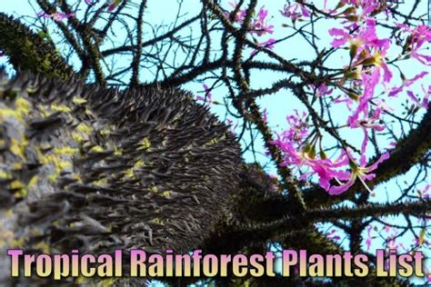 what plants live in tropical rainforest tropical rainforest plants list information pictures facts
