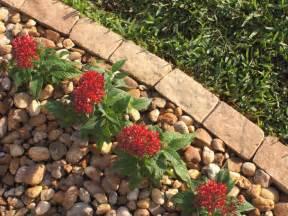 Rocks For Garden Borders 10 Garden Edging Ideas With Bricks And Rocks Garden Club