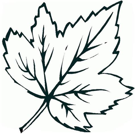 leaf coloring page free coloring pages of maple leaves