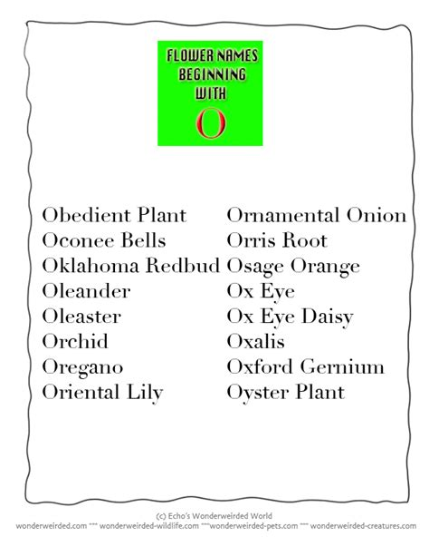 Names Beginning With The Letter O a list of all flowers name beginning with o from our