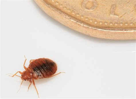 bed bugs forced woman to chop her hair
