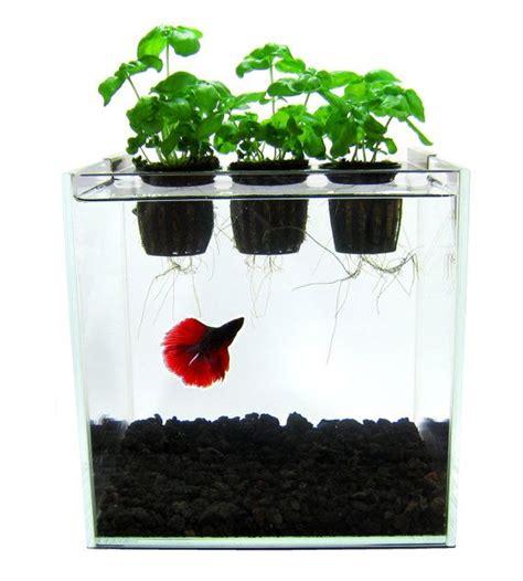 aquaponics est  systeme ou les dechets produits par les