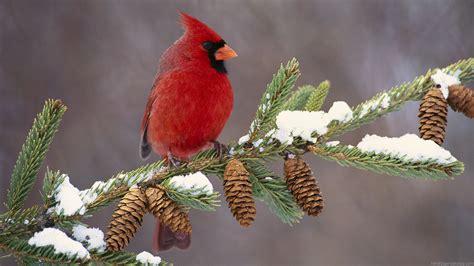 pinterest wallpaper birds winter birds wallpaper hd wallpapers 1080p hd