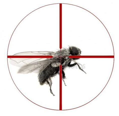 kill house flies kill house fly with crosshairs stock photo 169 eric1513 42793605