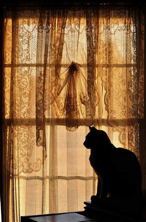 cat lace curtains 564 best black cats images on pinterest black kittens