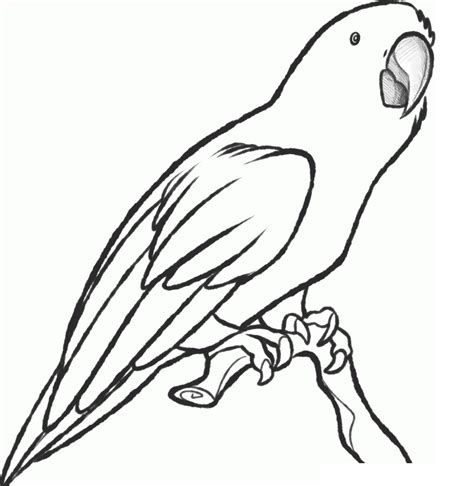 parrot coloring page free printable parrot coloring pages for animal place