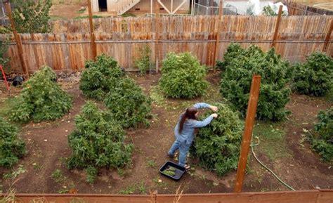 Indoors Garden by Growing Marijuana Outdoors How To Grow The Easy Way
