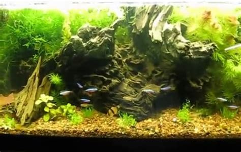 Aquascaping For Beginners by Balanced Aquascaped Rocks Plants Gravel And Fish