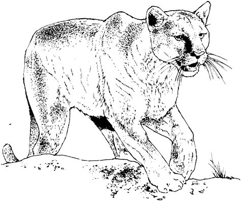 free panthers coloring pages