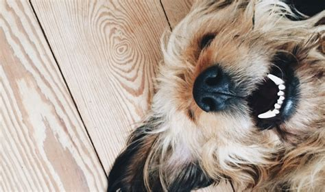 when to get puppy spayed spaying your dogtime