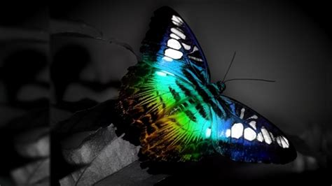 Live Butterfly Wallpaper For Windows 7 by Butterfly Animals Theme For Windows 7 And 8 Part I