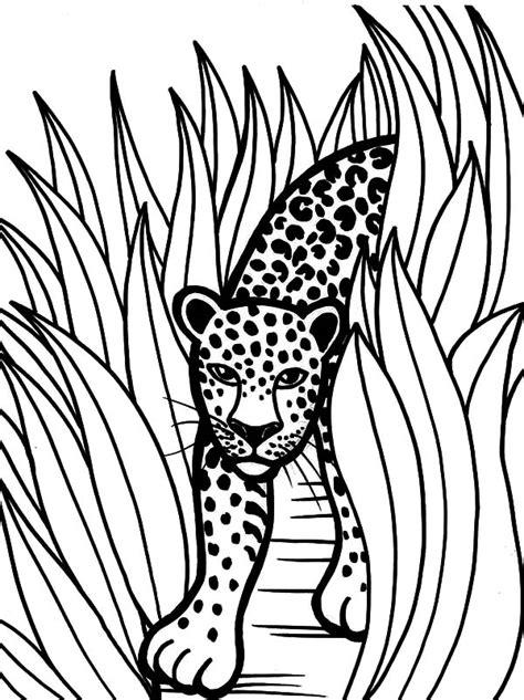 jaguar cat coloring page rainforest animal jaguar coloring pages bulk color
