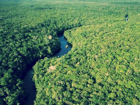 amazon amazon amazon rainforest wallpapers wallpaper cave