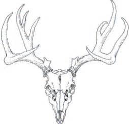 stag skull outline tattoos pinterest