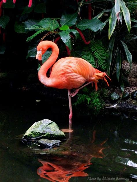 pink flamingo google search tattoo ideas pinterest