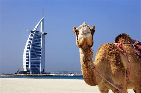 telegraph travel section 12 things i wish i d known before i went to dubai