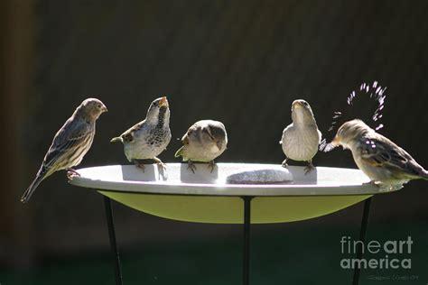 Doves Look Like Summer Feel Like Summer Contest by Birds From Bird Bath In Summer
