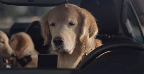 subaru believes dog focused advertising   part