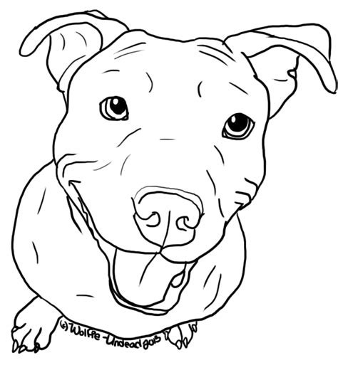 sketches of pitbull art coloring pages