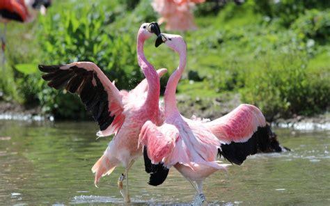 flamingo wallpaper nyc pink flamingos dog