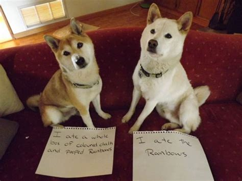 shamed dogs a new gallery of shaming photos has more hounds confessing to the unthinkable