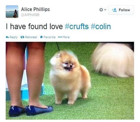 crufts pomeranian colin the pomeranian was robbed at crufts and here s why