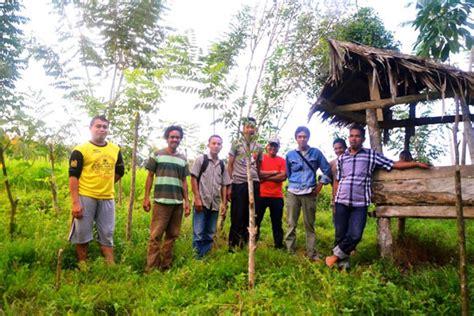 Bibit Jahe Merah Bekasi belajar dari kung organik di desa salassae mongabay co id