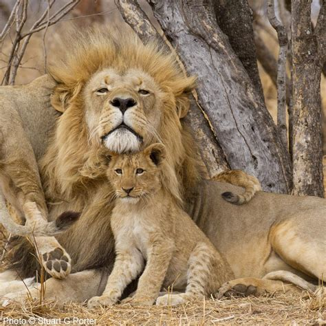 protect african animals  poachers  rainforest site