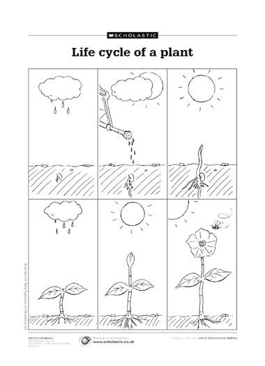 free printable animal life cycle worksheets life cycle of a plant early years teaching resource