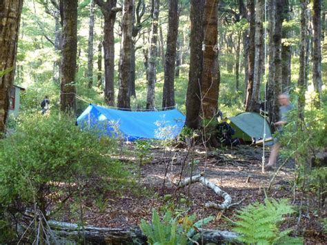 bushcraft new zealand sign up now for bushcraft 2014 wellington tring and