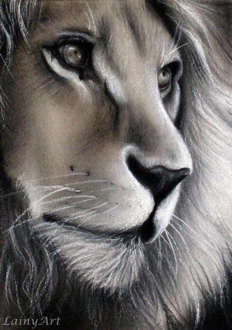 Amazing Animal Drawings