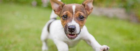 free puppy classes at petsmart puppy tips petsmart