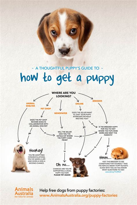where to get a puppy is going to the dogs help be the change for pets paws and pedals