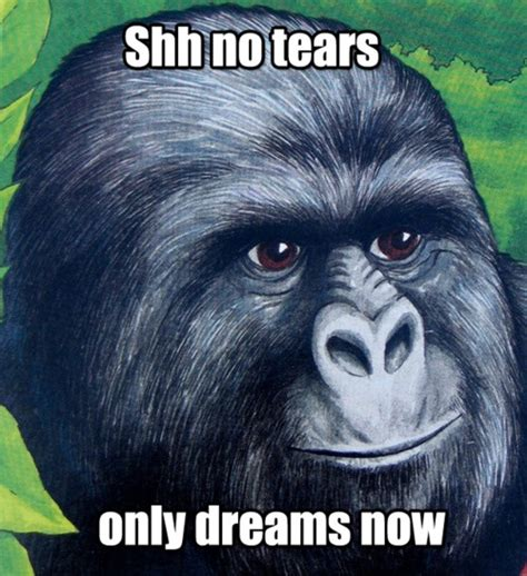 Gorilla Munch Meme - shh no tears only dreams now there is no need to be