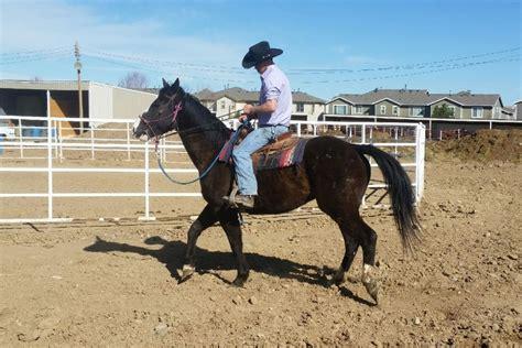 adoption colorado springs rescues in colorado springs best image konpax 2017