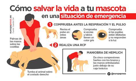 salvar la vida la c 243 mo salvar la vida a tu mascota en una situaci 243 n de emergencia