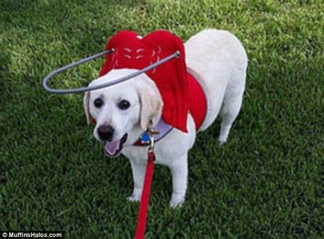 toys for blind dogs blind dogs are given new lease of with a halo daily mail
