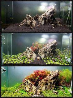 aquascape zeitschrift lepomis megalotis gro 223 ohr sonnenbarsch im aquarium