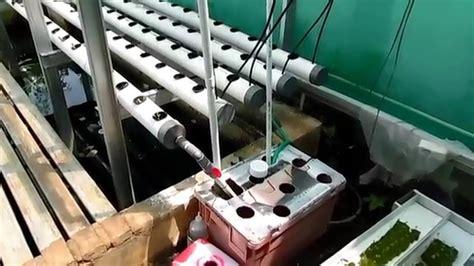 V Sock Untuk Sistem Hidroponik Dft hidroponik dft rak bertingkat dengan paralon 3 inch untuk sayur daun