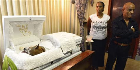 funeral news at need credit payment plans for funeral loved dog gets human like funeral