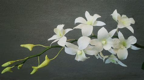orquidea de papel crepe abc tv how to make white dendrobium orchids paper