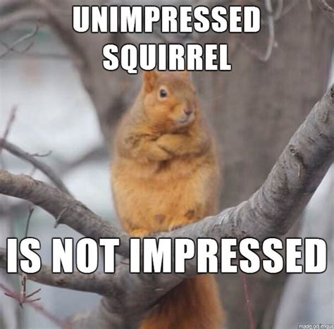 Funny Squirrel Memes - 36 most funniest squirrel meme photos that will make you laugh