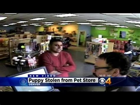 puppy store denver gives commentary on the of animals in a doovi