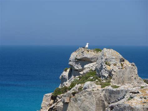 il gabbiano viaggi gabbiano solitario viaggi vacanze e turismo turisti