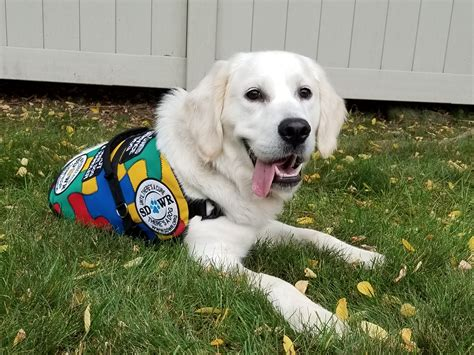 golden retriever autism trained autism service to help five year child in springfield oregon newswire