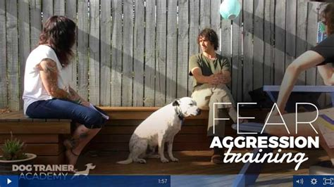 fear aggression fear aggression the amazing ability for dogs to change the trainer