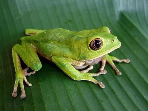 imagenes animales anfibios que comen los anfibios donde viven como nacen