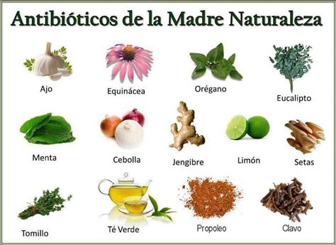 86 best images about plantas medicinales on tes health and argentina